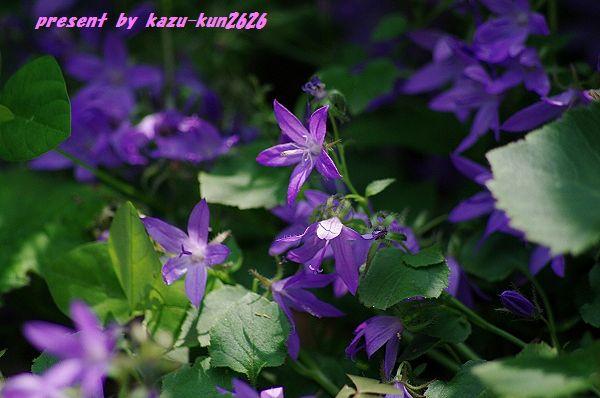 IMGP5834.jpg