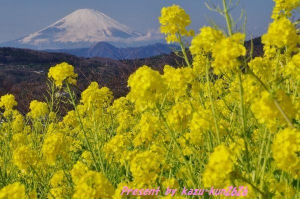 20110105吾妻山1.jpg