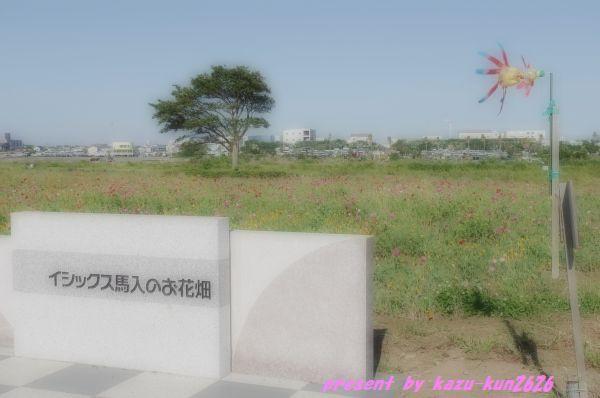 IMGP1392.jpg
