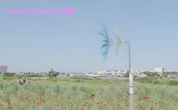 IMGP1401.jpg