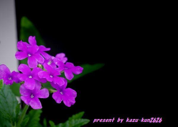 IMGP3657.jpg