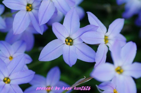 IMGP6239.jpg