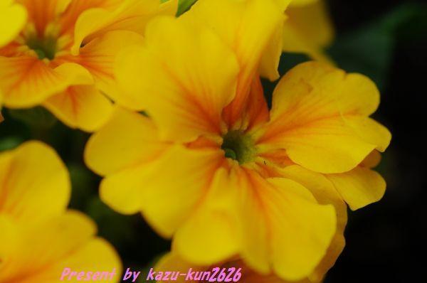 IMGP6834.jpg