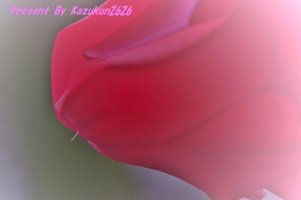 IMGP7617.jpg
