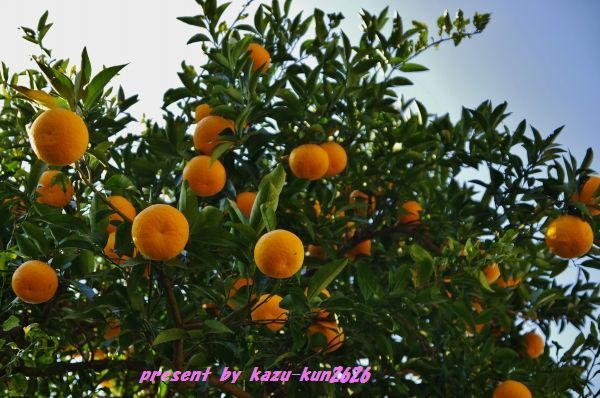 IMGP7940.jpg
