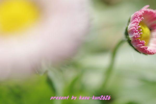 IMGP9164.jpg