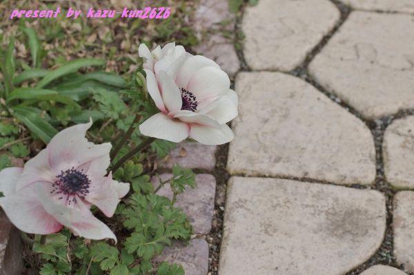 IMGP9165.jpg