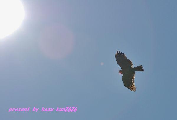 IMGP9319.jpg