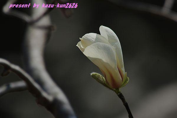 IMGP9702.jpg