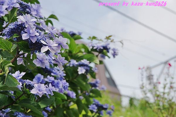 IMGP2546.jpg