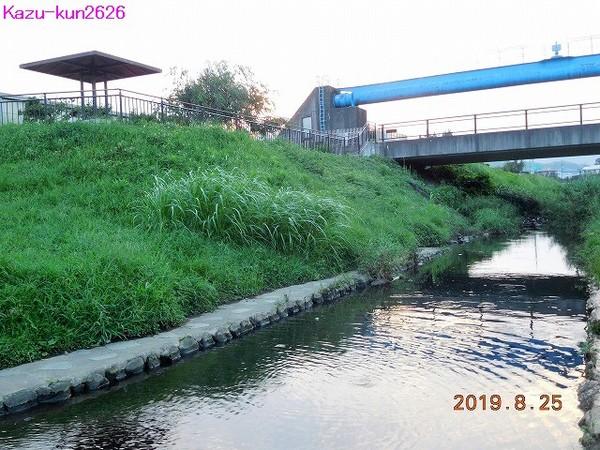 DSCN5996.jpg