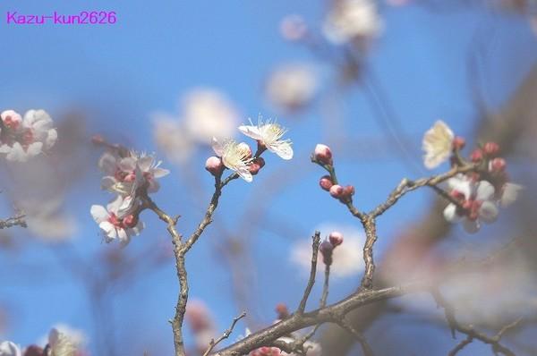 IMGP5132.jpg