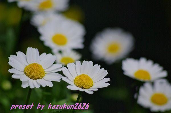 IMGP6932.jpg