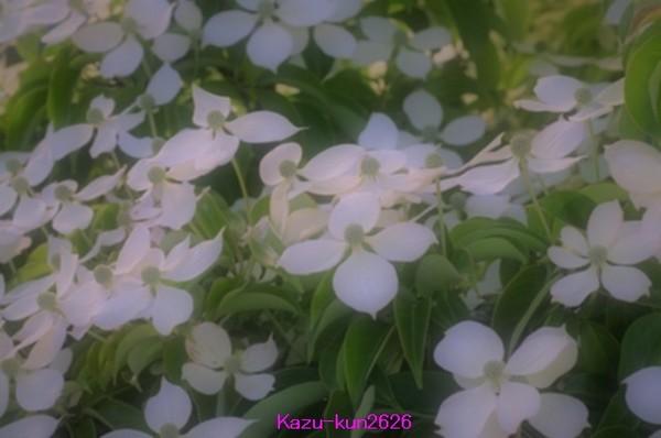 IMGP7332.jpg