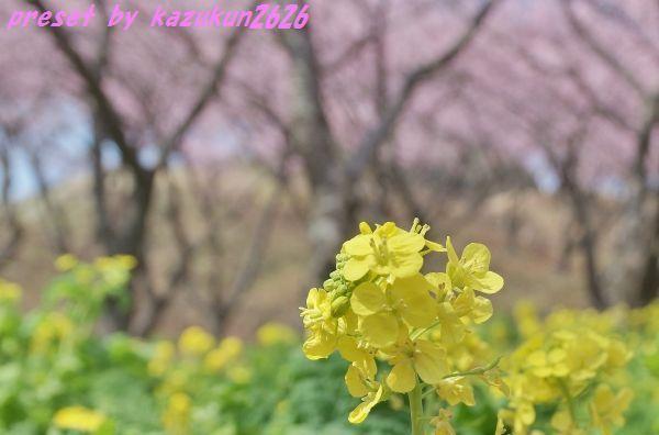 IMGP7946 (2).jpg