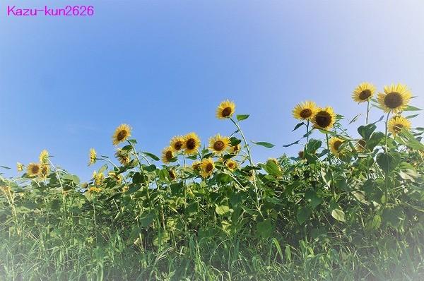 IMGP8101.jpg
