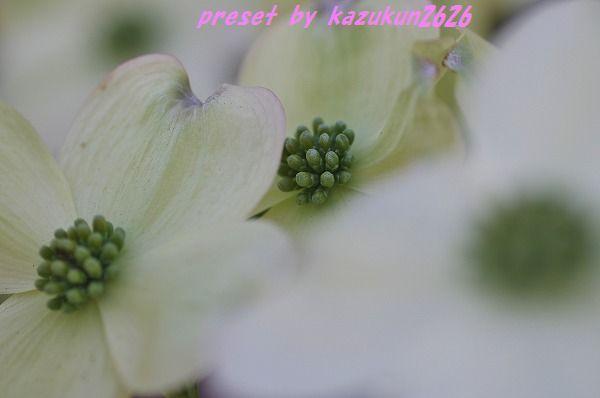 IMGP9178.jpg